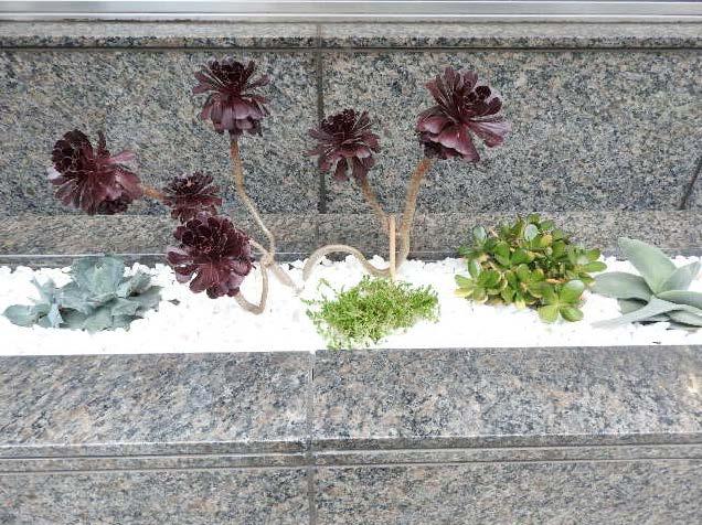 当店の観葉植物